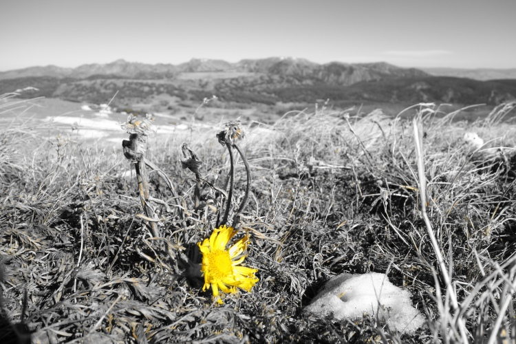 A flower still hanging on at 12 00 ft at the end of October. No one told it summer was over, so it just kept growing.
